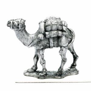 Dromedary Pack Camel