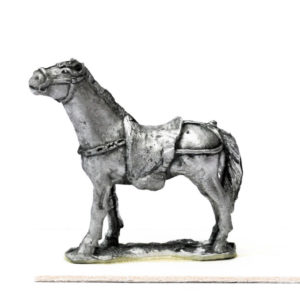 Horse, Blanket, Standing