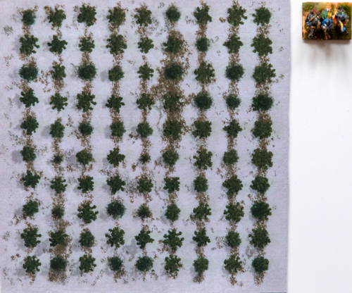 Plantation in winter